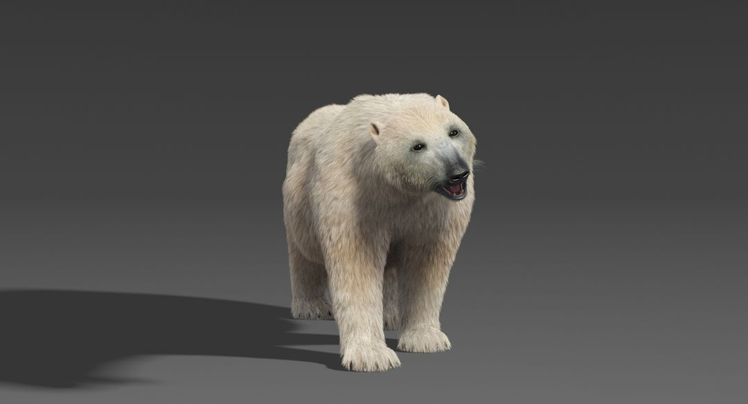 Polar Bear (Fur) Rigged Polar Bear 10 jpg