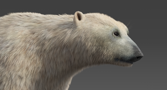 Polar Bear (Fur) Rigged