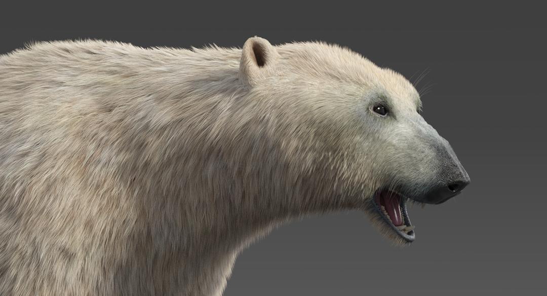 Polar Bear (Fur) Rigged Polar Bear 15 png