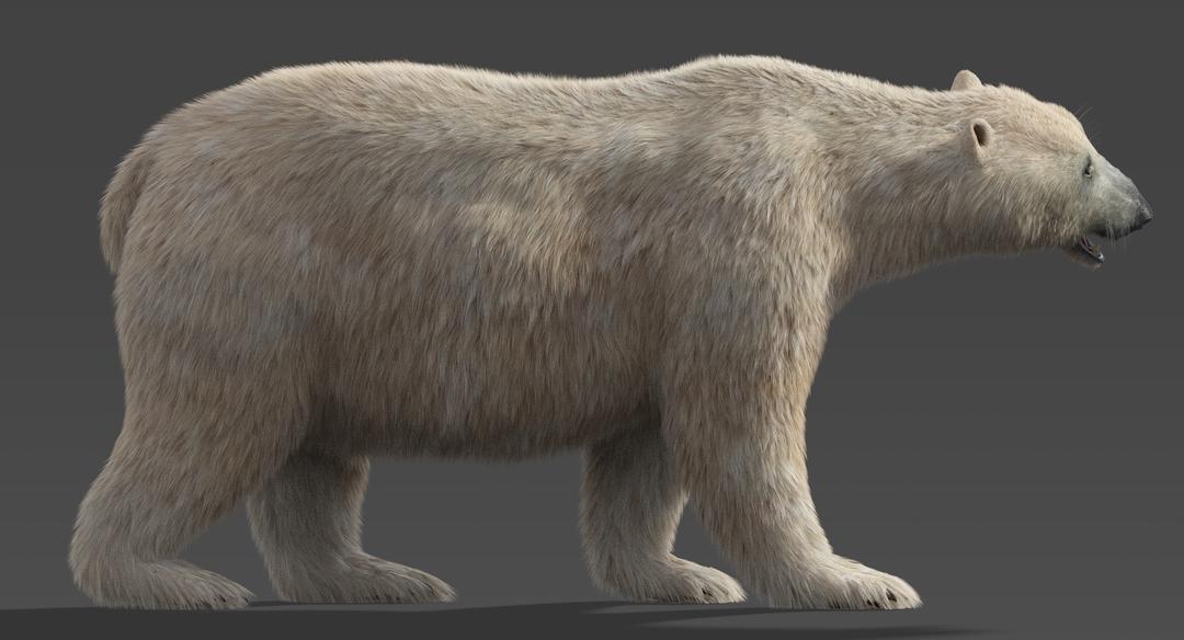Polar Bear (Fur) Rigged Polar Bear 2 png