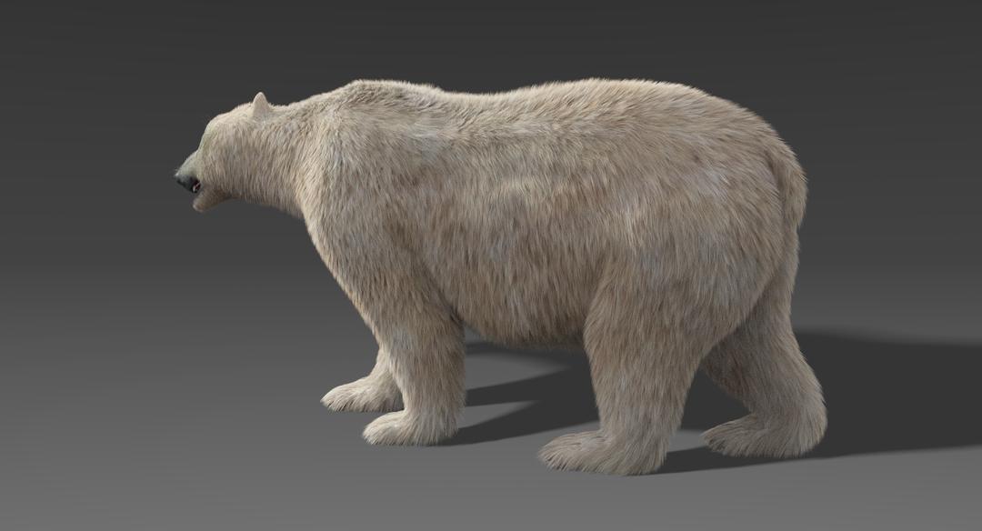 Polar Bear (Fur) Rigged Polar Bear 3 png