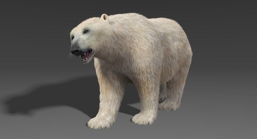 Polar Bear (Fur) Rigged Polar Bear 6 png