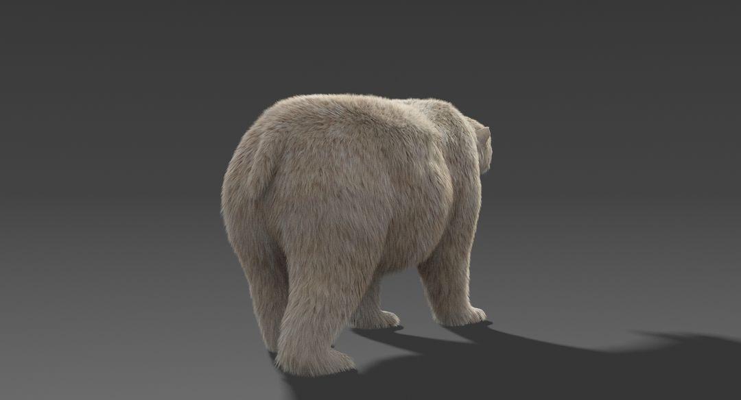 Polar Bear (Fur) Rigged Polar Bear 9 jpg