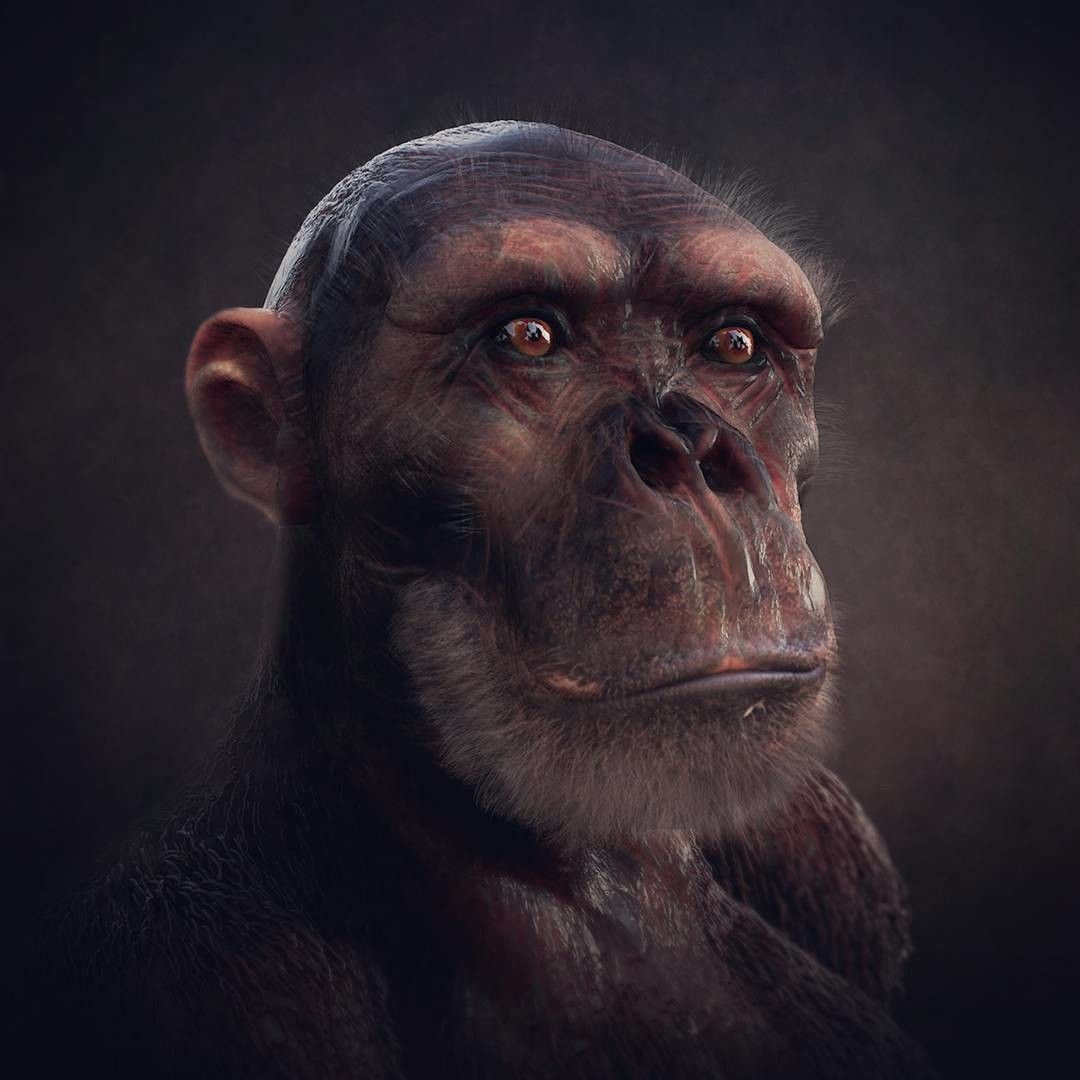 Chimpanzee narendra keshkar chimpanzee 3 jpg