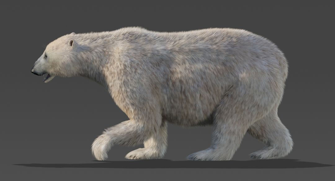Polar Bear (Fur) Animated Bear 2 jpg