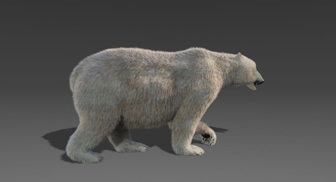 Polar Bear (Fur) Animated Bear 4 jpg