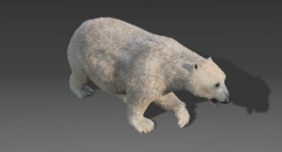 Polar Bear (Fur) Animated Bear 5 jpg