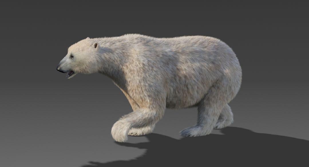 Polar Bear (Fur) Animated Bear 6 jpg