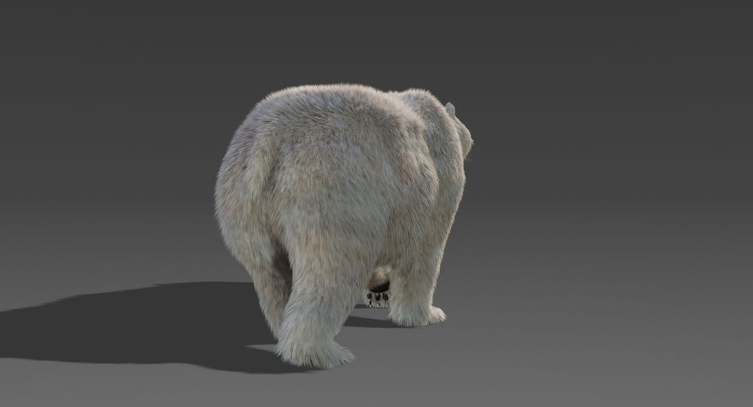 Polar Bear (Fur) Animated Bear 8 jpg