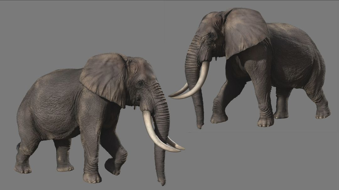 3D Creature/Monster/Character for Game elephant jpg