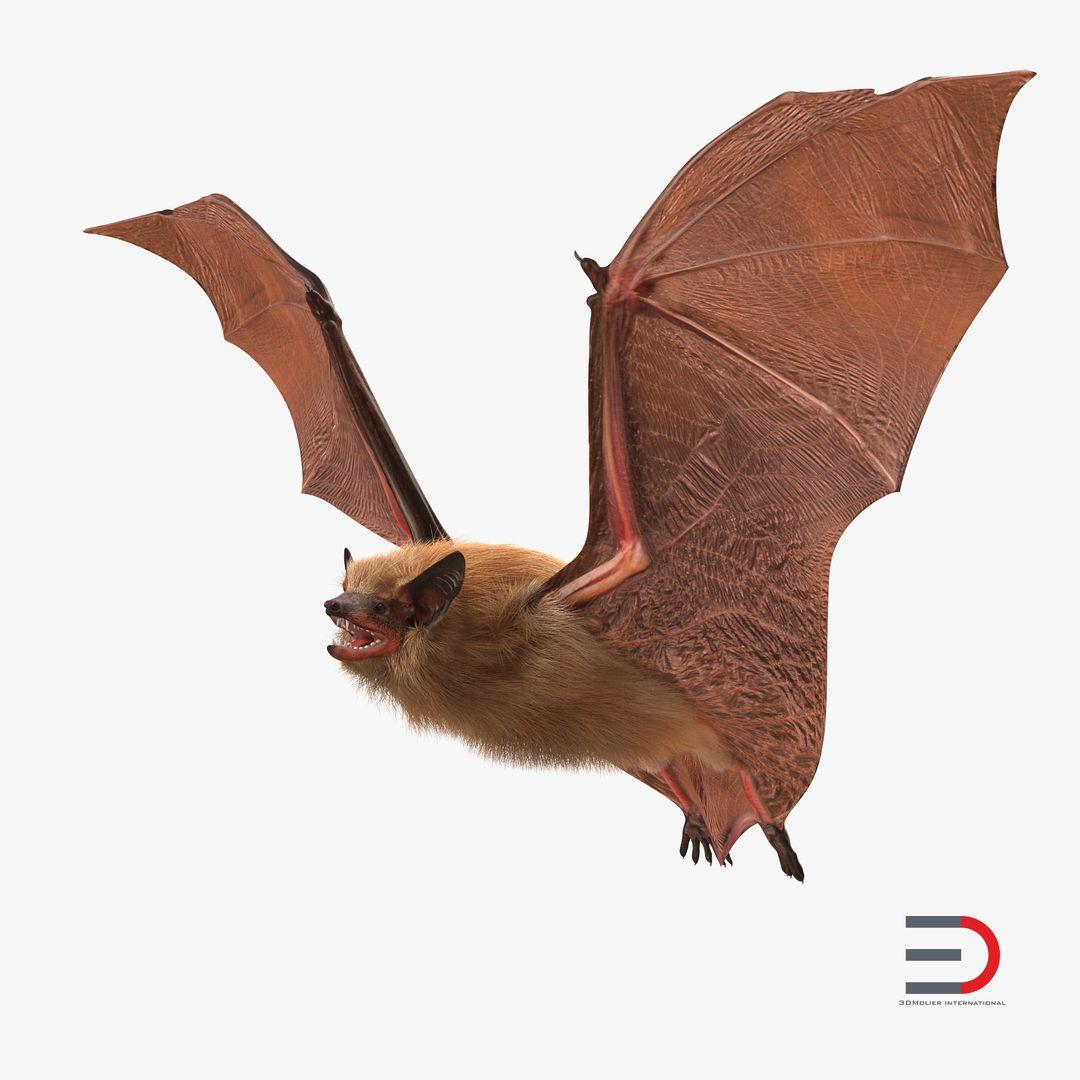 Animal Modeling FlyingBatwithFurmb3dmodel000 jpg
