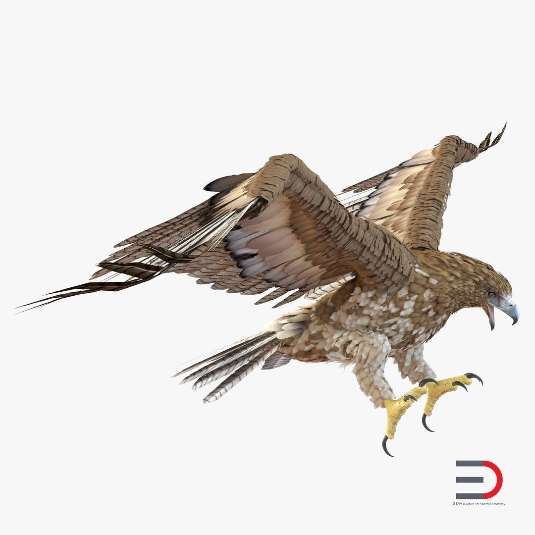 Animal Modeling GurneylEagle3dmodel01 jpg