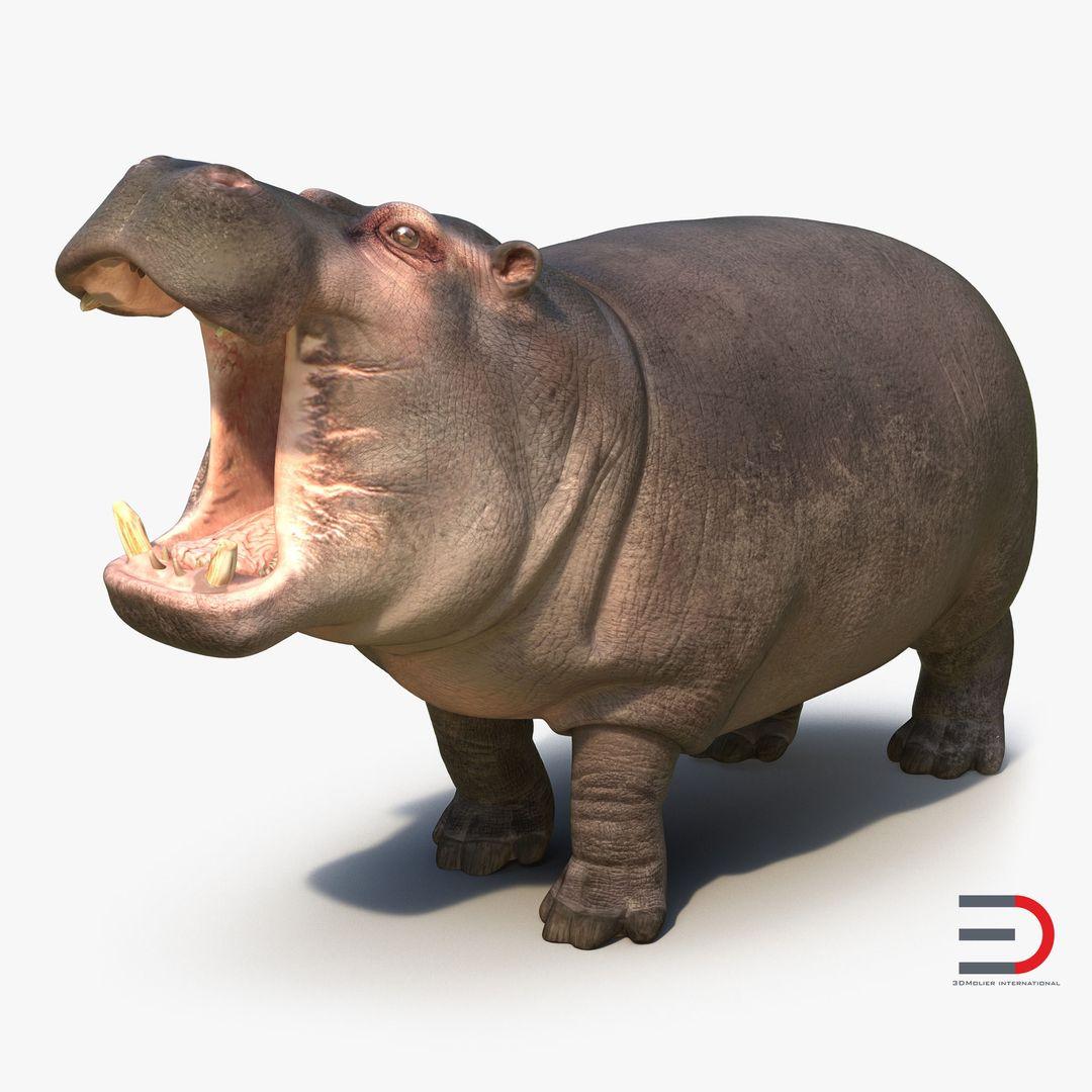 Animal Modeling Hippopotamus Pose 2 jpg