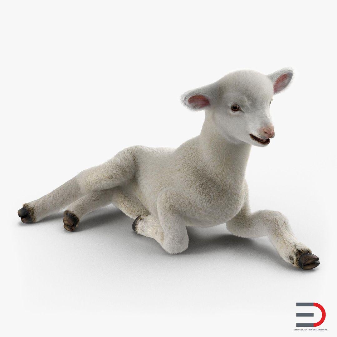 Animal Modeling Lamb Pose 4 with Fur jpg