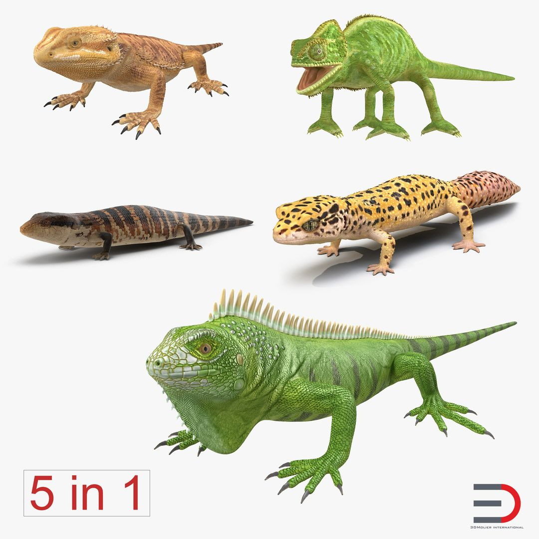 Animal Modeling LizardsCollectionvray3dmodels00 jpg6EDFAB22 0785 4BCE 9B4E 30B559E8125AOriginal jpg