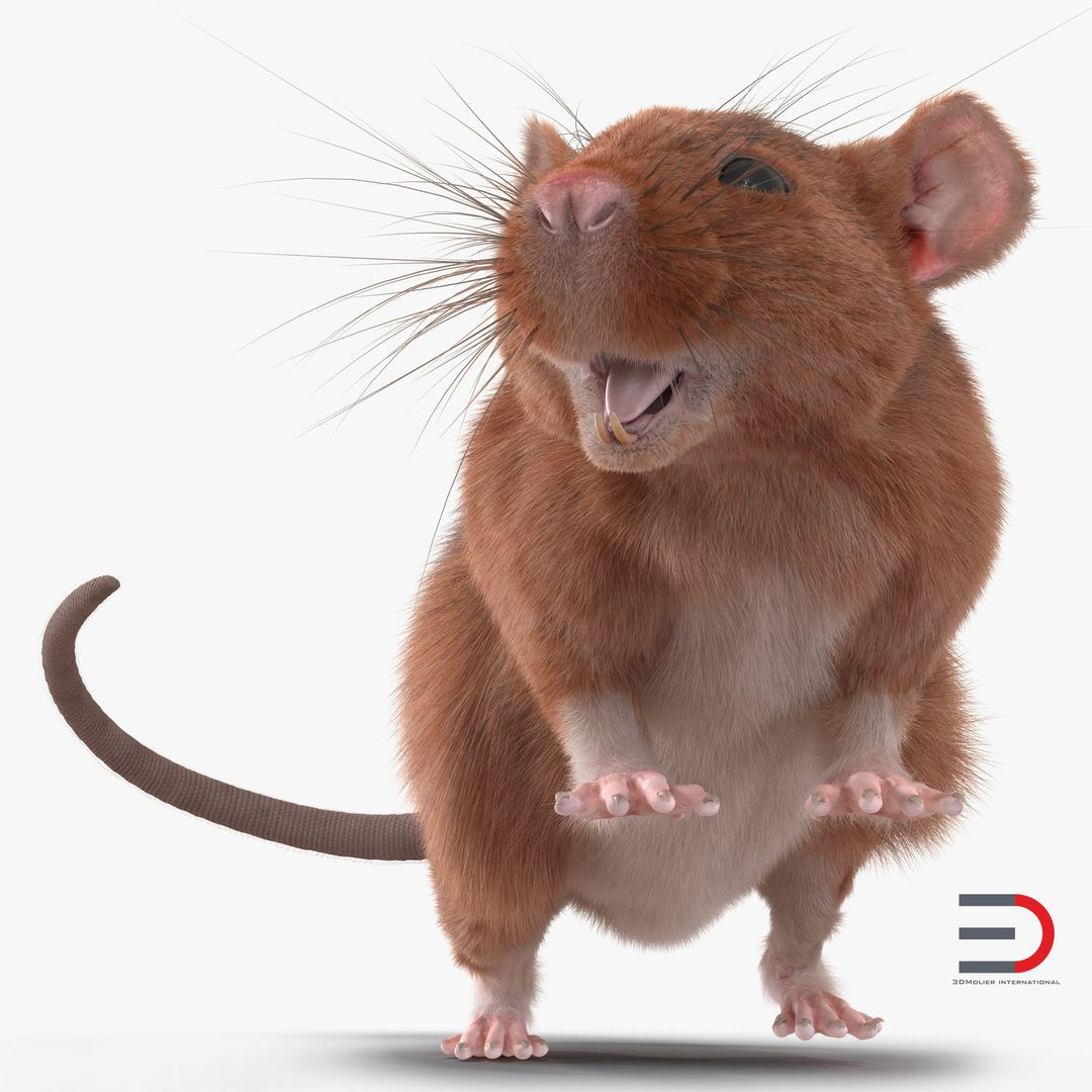 Animal Modeling Rat 2 Rigged jpg