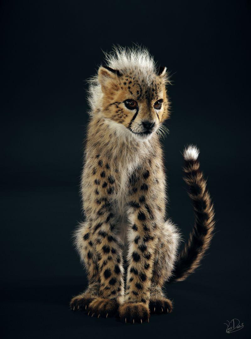 Baby Cheetah Cheetah 01 jpg