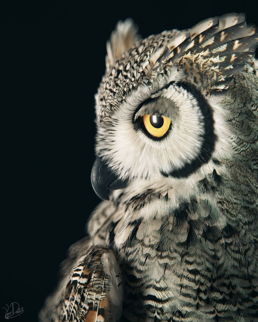 Subarctic Great Horned Owl Owl 02 jpg