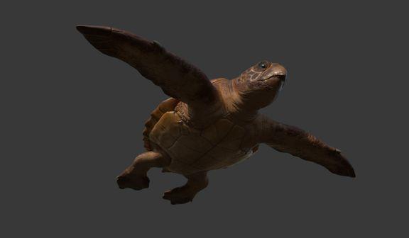 Real Time - Loggerhead Turtle