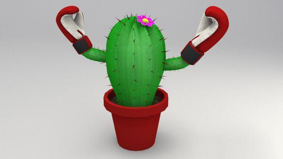 Boxer Cactus