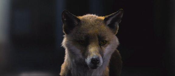 Ziva Fox