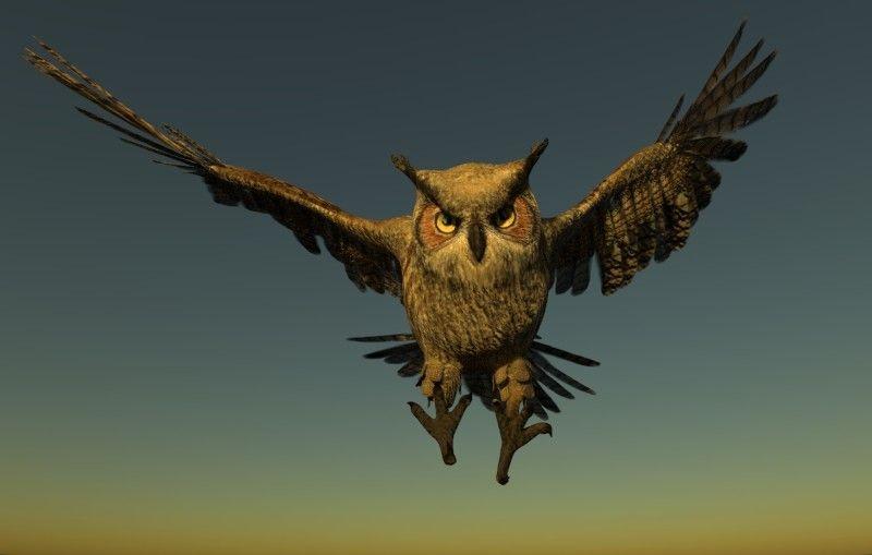 Horned Owl Horned Owl 02 jpg