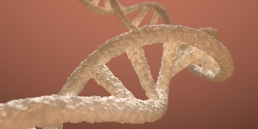 DNA Strand for medical animation dna double helix 3d model 3d model rigged obj mtl fbx blend dae jpg
