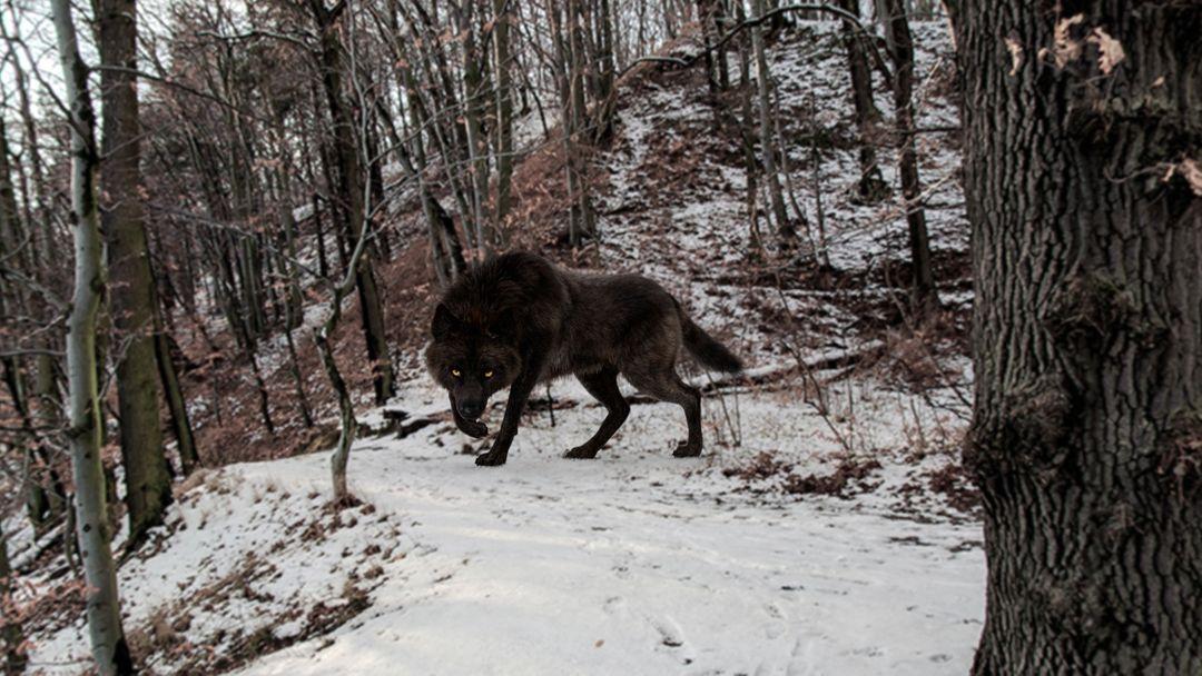 Black Timber Wolf (Fur) Rigged 14 jpg
