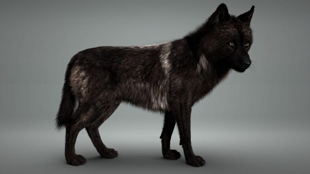 Black Timber Wolf (Fur) Rigged Idle w jpg