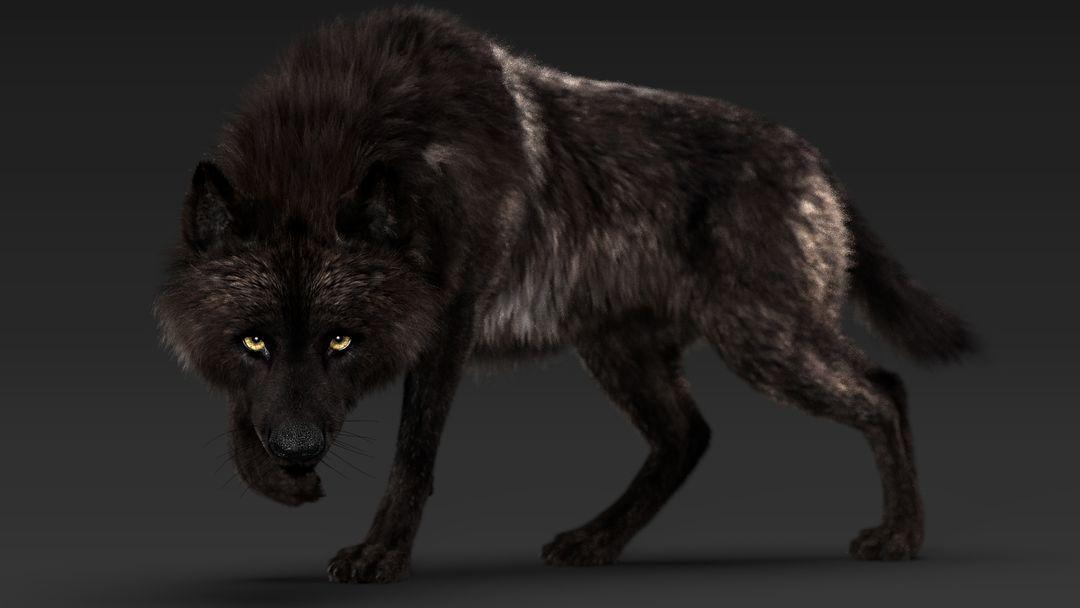 Black Timber Wolf (Fur) Rigged Wolf 01 jpg