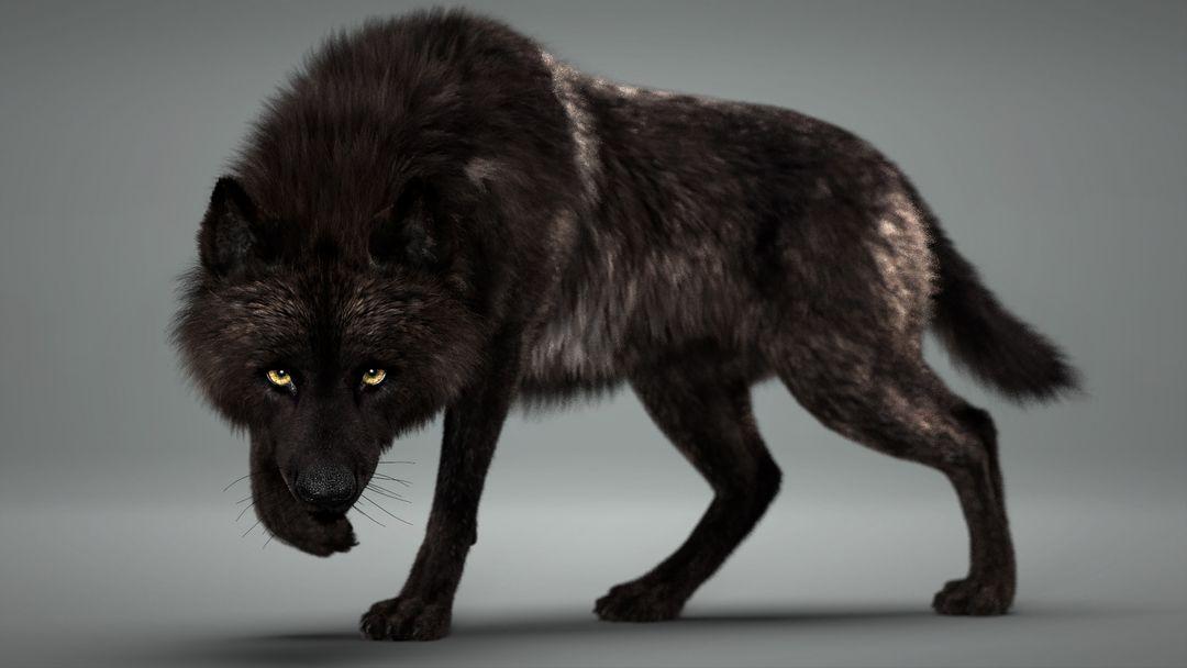 Black Timber Wolf (Fur) Rigged Wolf 02 jpg