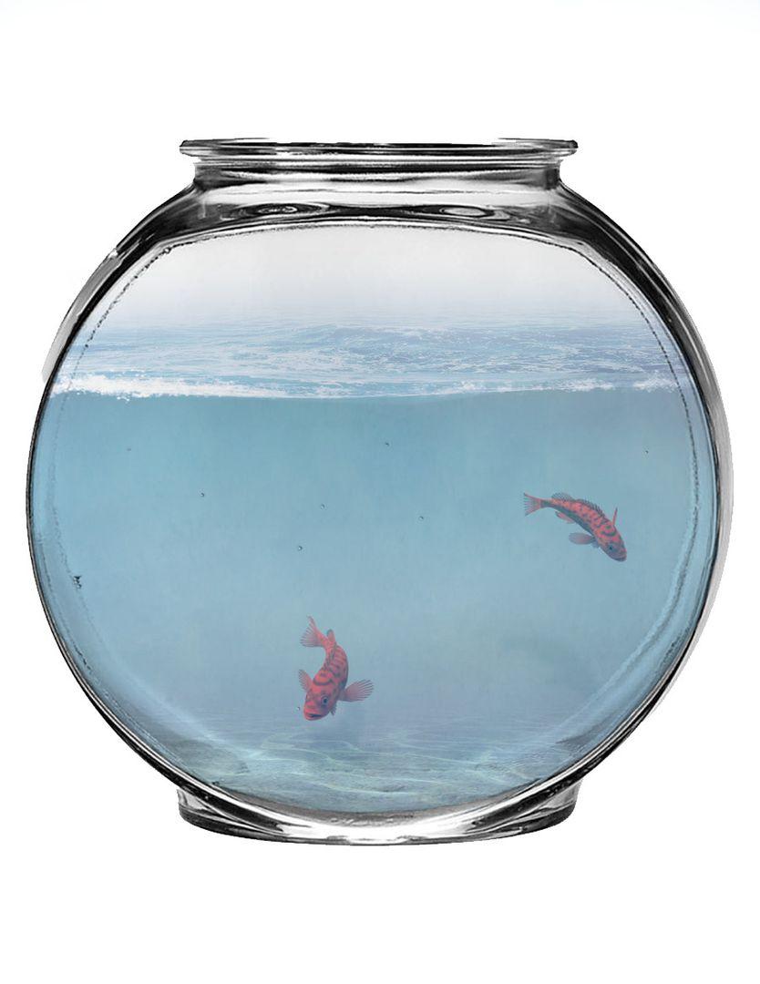 Persnol Work abdullah jalil fish bowl jpg