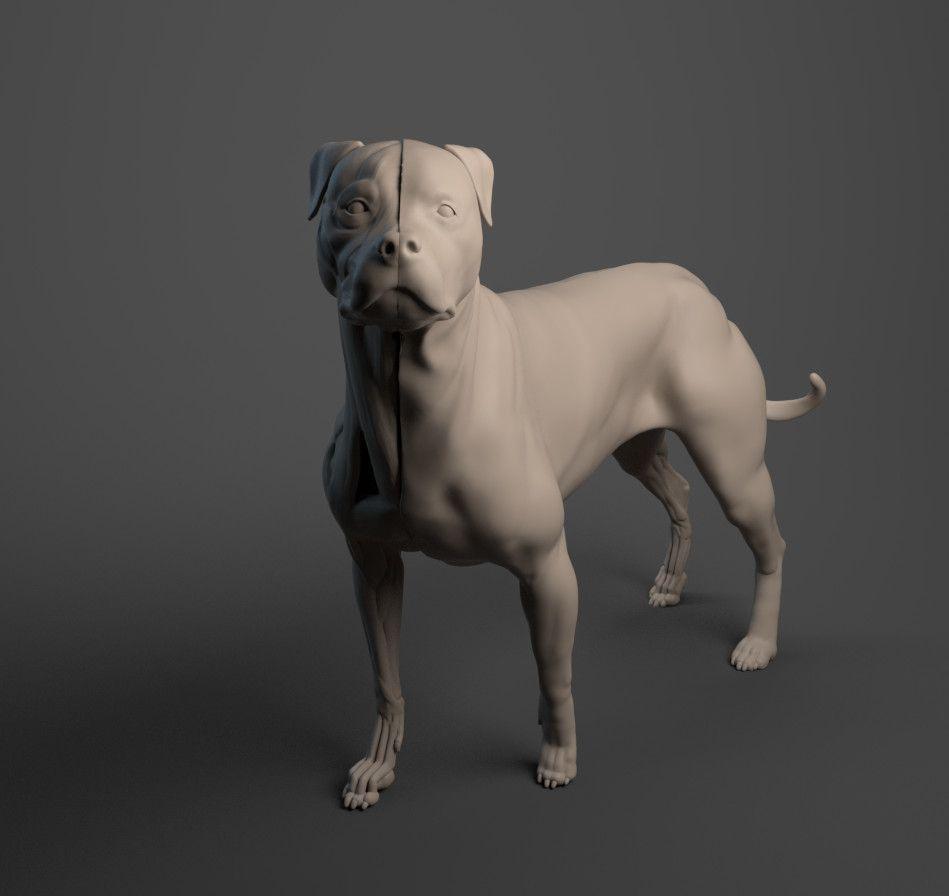 Rottweiler Écorché eiti sato vray cover jpg